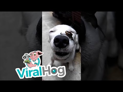 Snail Slides Over Dog's Nose || ViralHog