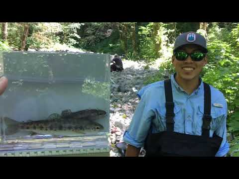 Journey To Recover Fish From Bluebird Creek 2018
