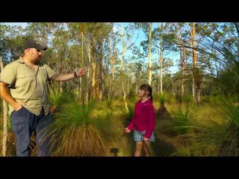 "Australian Survival School - Grass tree ""Xanthorrhoea""."
