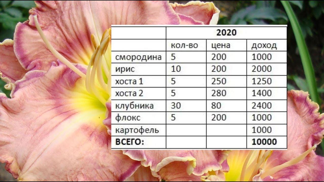 Садовый бизнес. ч.5. Бизнес план - как отправная точка