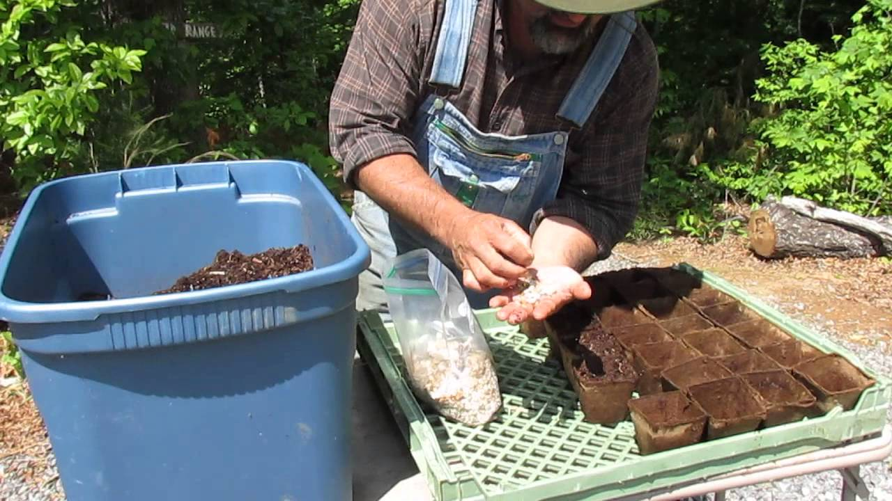 How To Plant Giant Sunflower Seeds- by The Luffa Ranch