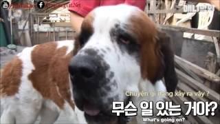 5レオンベルガー犬非常に大声でかわいいです。彼女の情報によると、そこ...