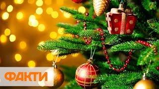 Как правильно выбрать новогоднюю елку и не попасть на крючок мошенников