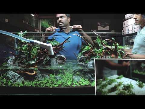 Tropico Aqua - Masterscape by Adip Sajjan Raj