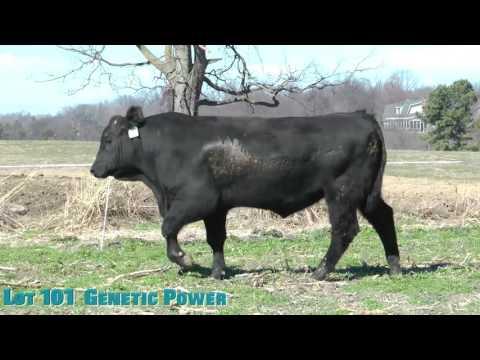 Lot 101  Genetic Power