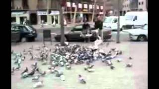 Spain Declares War on Pigeons With Net Catapult