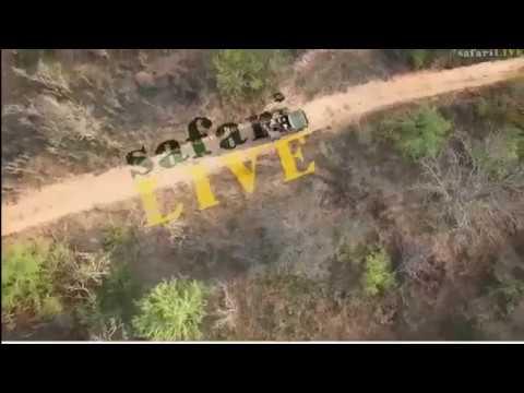 Wild Earth Africa sunset 9-march-2017 Hosana on Bushwalk,Hippo, Wild Dogs, xongile&Hoasana