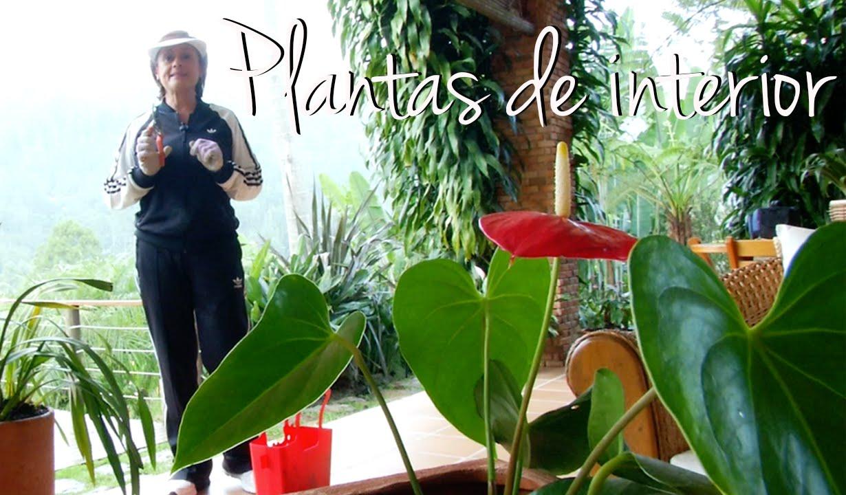 las mejores plantas para el hogar youtube