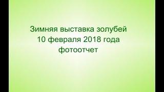 Выставка голубей 10 ФЕВРАЛЯ 2018 года в г. Тула. Голуби России (часть 2)