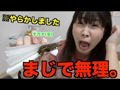 【※閲覧&騒音注意※】タガメ(虫)を食べようとしたら‥‥。