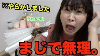 【※閲覧&騒音注意※】タガメ(虫)を食べようとしたら‥‥。 大関れいか 検索動画 6