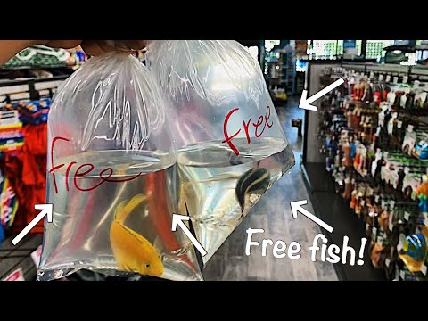 This Pet Store Gave Me FREE* Fish!!