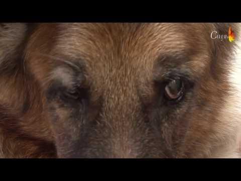 Централна Ветеринарна Клиника - Част 3/ Central Vet Clinic - Part 3