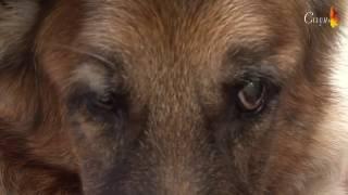 видео круглосуточная ветеринарная помощь