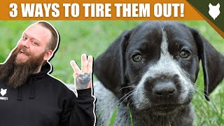 3 Tips To Tire Out Your GERMAN SHORTHAIRED POINTER Puppy