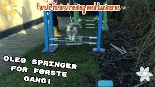 Forårs træning med kaninerne l Vlog med Olivias Verden