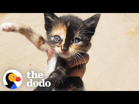 Tiny Kitten Runs Out Of Bushes To Her New Mom | The Dodo Little But Fierce