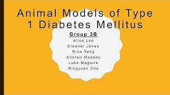 hqdefault - Animal Models Of Diabetes Mellitus