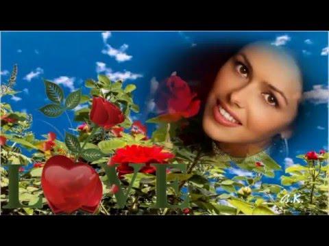 🌹 Rote Rosen Schenk Ich Dir 💕🌹💕 Ricky Berger