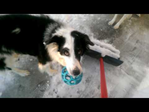 border collies and snow shovels!