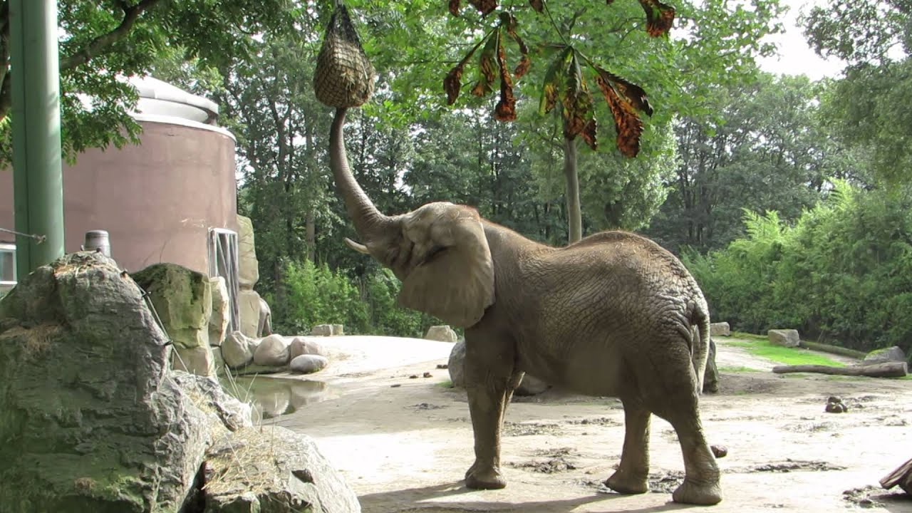 Elefant RГјГџel Nach Oben
