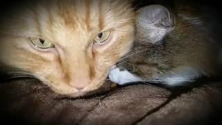 Коты кушают ))) очень забавное зрелище в замедленной сьемке !))))