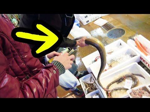 巨大魚だらけの市場で珍生物を大人買いしてきた。