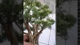 AADiorama - Produk pohon diorama