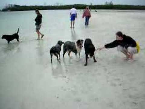 Bonita Springs Dog Beach