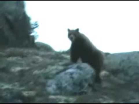 Björn i Rullbo i Hälsingland