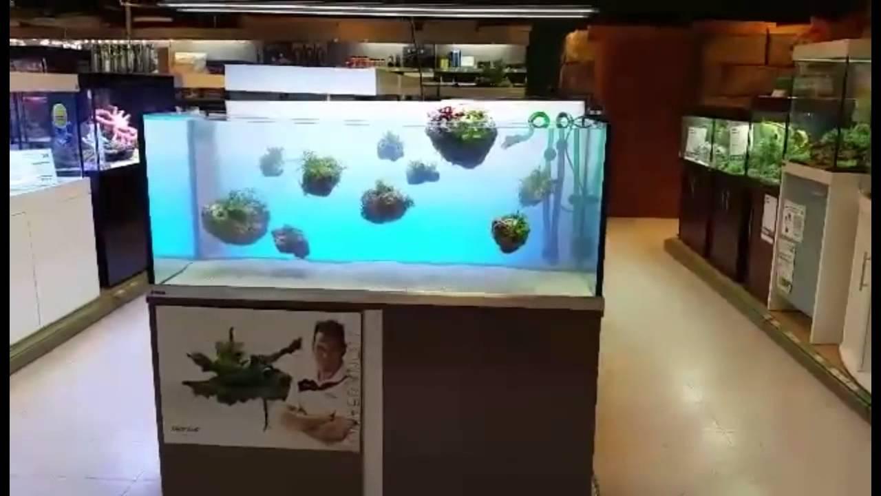 Aquascaping Steine : Schwimmende Steine im Aquarium by Oliver Knott - YouTube