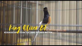 Kisah Inspiratif : Berani Terus Mencoba, King Oliver BF Buktikan Bisa Sukses Di Breeding Murai Batu
