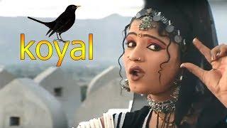 राजस्थान में ये प्यारा गाना जबरजस्त धूम मचा रहा है || Koyal|| कोयल || रानी रंगीली