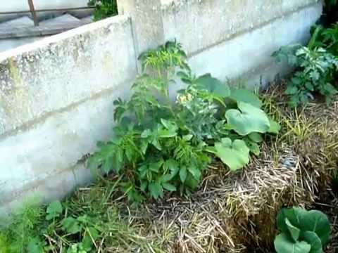 mon jardin potager urbain permaculture mai 2015 youtube. Black Bedroom Furniture Sets. Home Design Ideas