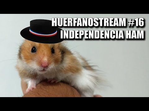 HuerfanoStream #016 - Independencia Ham