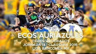 Ecos Auriazules, Tigres vs Dorados