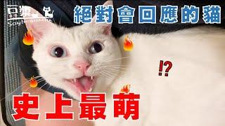【豆漿 - SoybeanMilk】只要2分鐘 對貓咪的印象改觀
