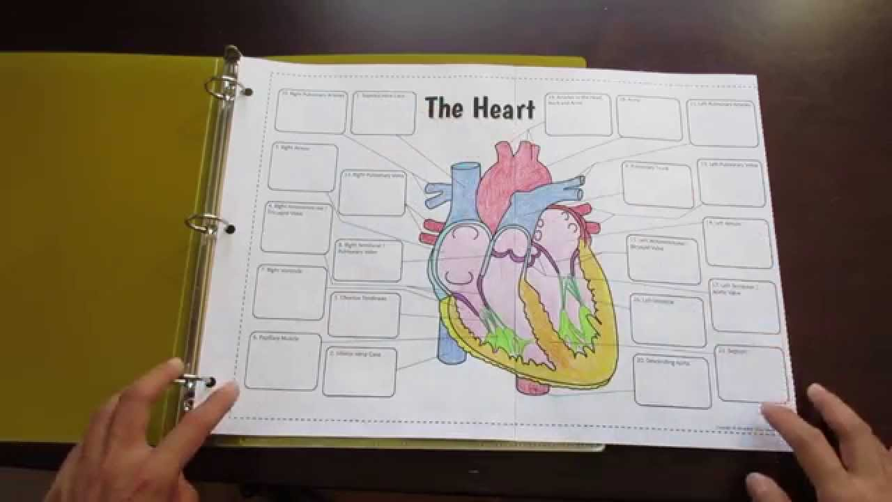 big heart foldable by tangstar science youtube rh youtube com science foldable templates diagram of folding