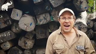 Baixar Luxury Timber logging Cambodia