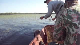 видео ловля щуки на рогатки