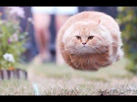 cat's name is funny merchandise②मजेदार बिल्लियां gatos divertidos القطط مضحك【面白い猫】