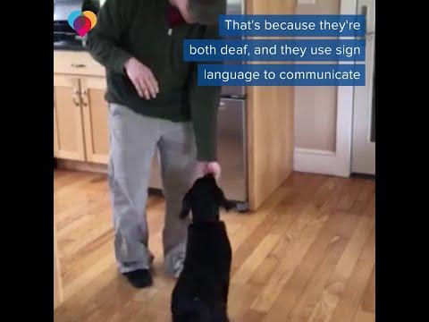 Kobi - Kobi's Feel Good Story: Deaf Man Adopts Dog And Teaches It Sign Language!