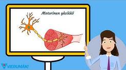 Lihassolut ja motorinen yksikkö