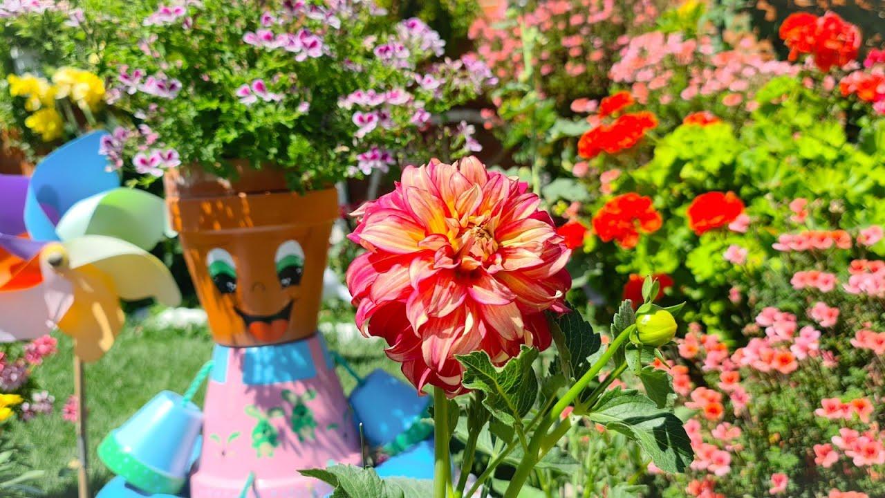Flor de la dalia los cuidados de los bulbos para que tengan hermosas flores y abundantes cada ano🌹