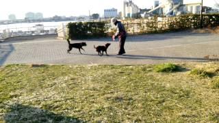 磯子海の見える公園での朝散歩です。 ママさん登場で嬉しいさくら&春で...