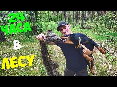 24 Часа в лесу! День рождения Бобби! Охота на кролика! Жареный кролик!