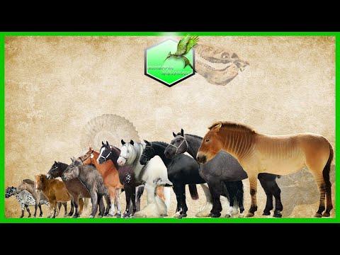 Horses Size Comparison