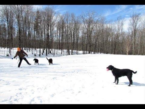 'Dogs, Snow & Daniel'