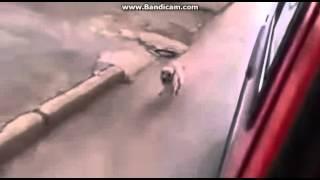 Упорото:Собака бежала быстро-клип