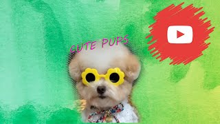 😁 Cute and funniest dogs 🐶 dogs Awesome cute pet Animal's life videos awesome compilation ❤️